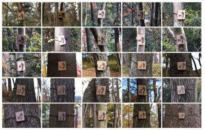 金剛沢市有林散策路サイン整備