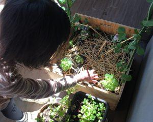 動く土 動く植物2